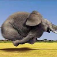 Kövér, kövér, nagyon kövér! Avagy a száguldó elefánt kalandjai! :) (116,5 kg)