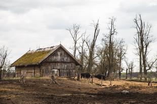 Magyarország legnagyobb bivalyrezervátuma tavasszal