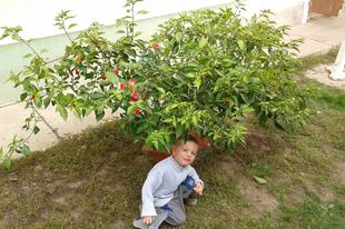 244. nap Növénytépázás és a gyilkos savanyúság