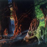 Geoff Taylor Mitágó-erdője