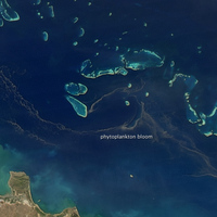 Fitoplankton-
