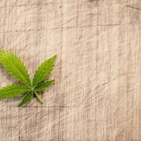 Kannabiszt minden asztalra?!