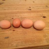 Mutasd a tojásod!