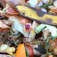 Azt még megeszed? – környezeti károk és az élelmiszerpazarlás