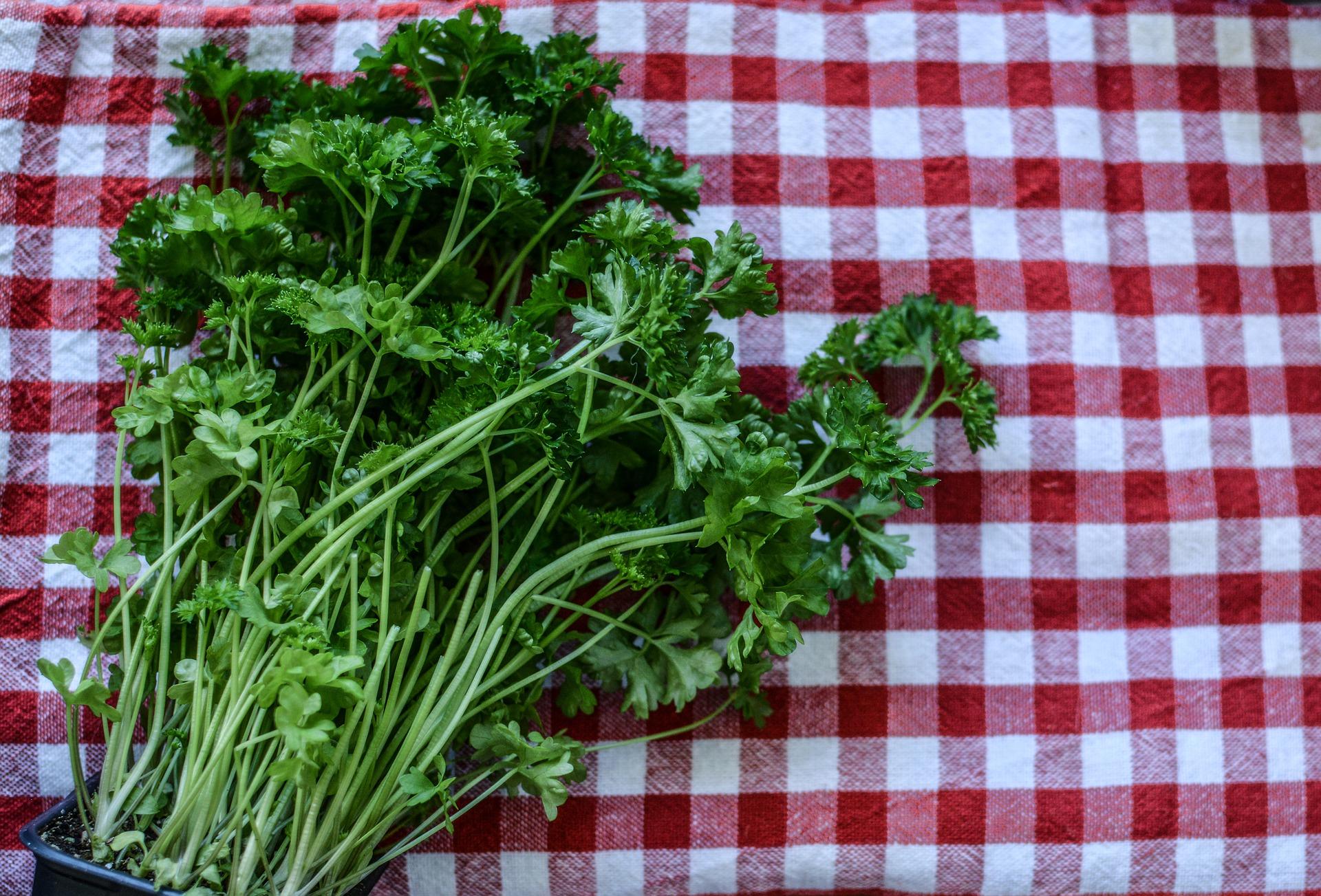 parsley-2874348_1920.jpg