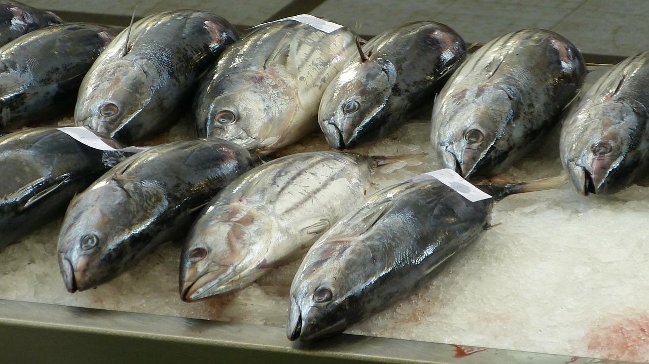 fish-market-244415_1280.jpg