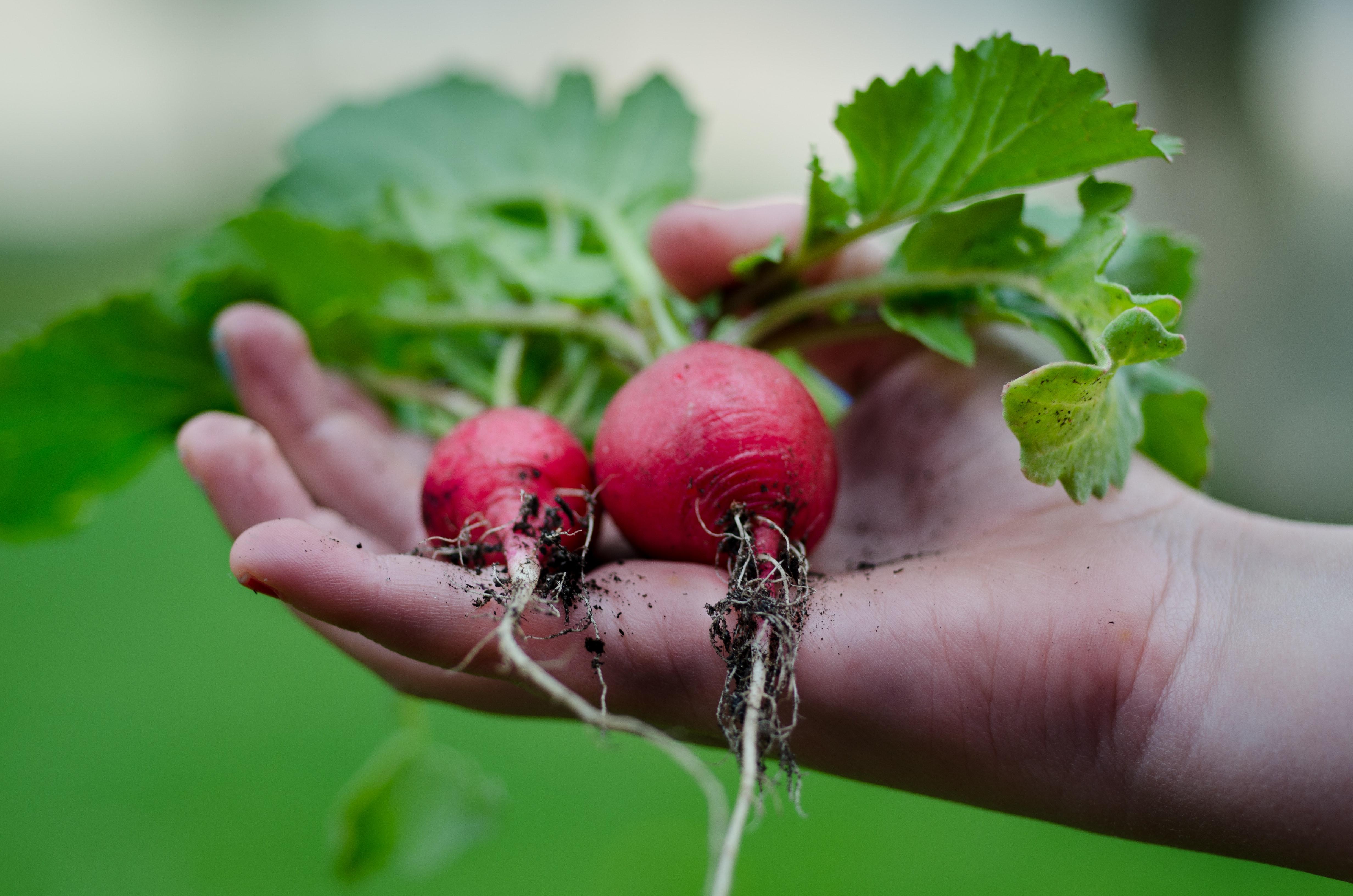 healthy-vegetables-hand-gardening-9301.jpg