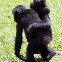 1500 állatfajnál figyelhető meg a homoszexualitás