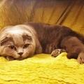 Mi kerül ezen a macskán 38 millió forintba?