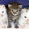 Macska allergiásoknak 5 millióért