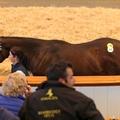 Négymillió dolláros lovat vett a dubai sejk