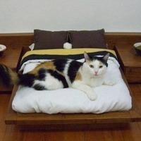 Csúcsluxus macskáknak