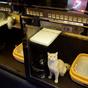 Luxushotel macskáknak