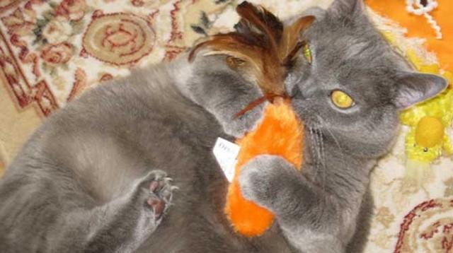 macska játszik.jpg