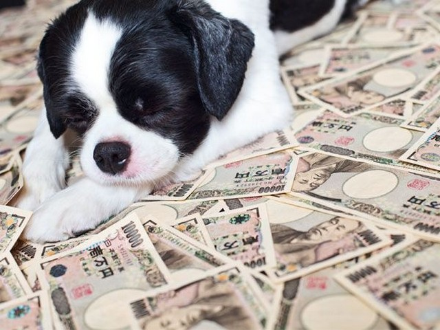 kutya pénzzel.jpg