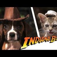 Indiana Csont, a legcukibb kalandor