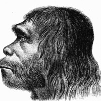 Neandervölgyi genom