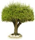 E-számla: 15 millió fát védhetnénk meg az Unióban