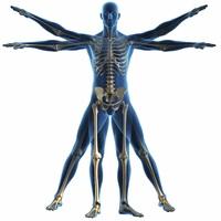 Izomegyensúly megbomlás a gerincpanaszok mögött