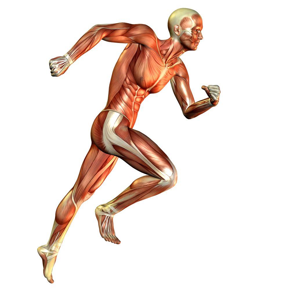 sportsanatomy.jpg