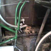 Dúgó a kutyánk kummant!!!!