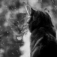 Az esős napok