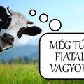 Nálam nem döglik meg a szomszéd tehene