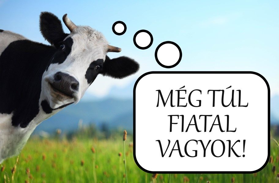 funny-cow-on-a-green-meadow_912_x_600.jpg