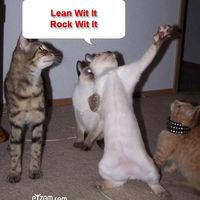 Macskás jellemrajz:)