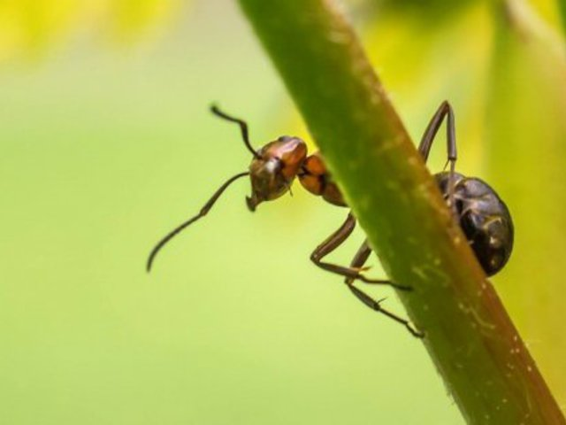 Tolató hangyák