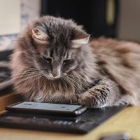 A macskák is képesek felismerni saját nevüket