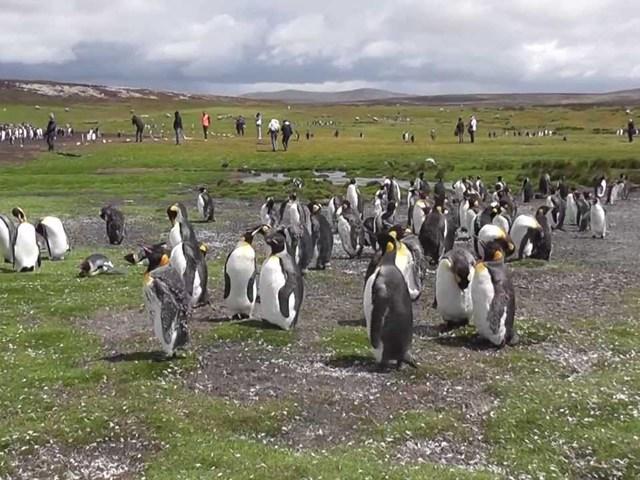 Növekszik a turistaforgalom a Falkland-szigeteken