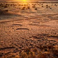 """Megoldódott a """"namíbiai körök"""" rejtélye"""