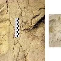 Történelemelőtti kisgyermek lábnyomai