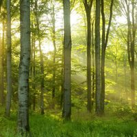 Trump-erdővel a klímáért