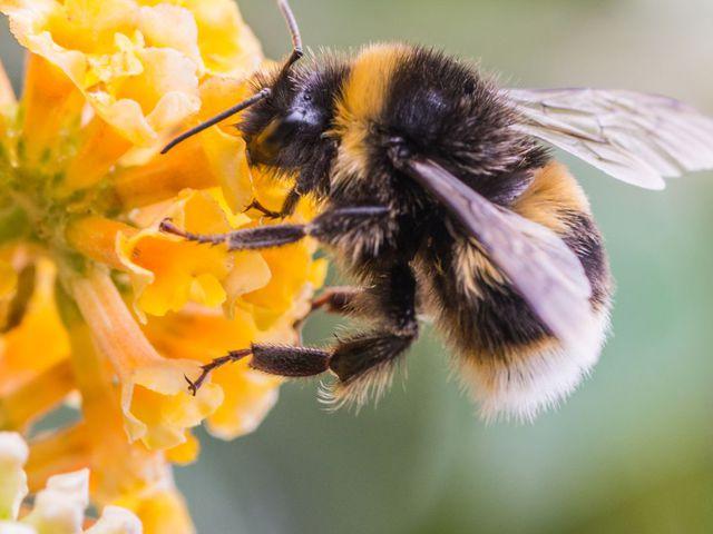 A méhek is elbutulnak a vegyszerekről