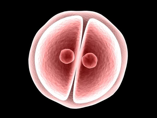 Itt a génmódosított embrió!