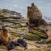 Falklandot birtokába vette a vad természet
