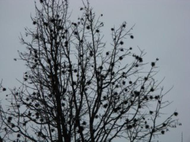 Fák a téli nyárban