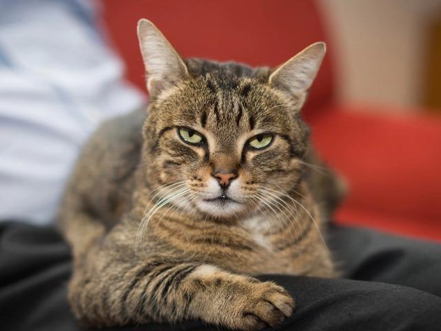 A macska a gazda tükre