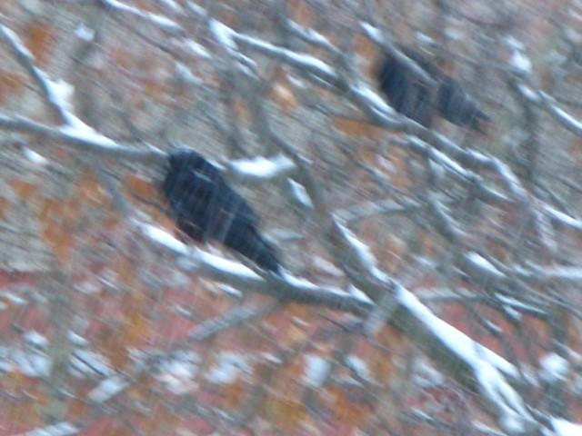 Madarak jönnek, madarak jönnek...(Hommage á Hitchcock)