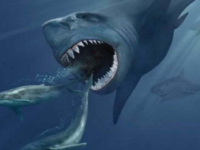 A történelem előtti cápákat egy szupernova irtotta ki