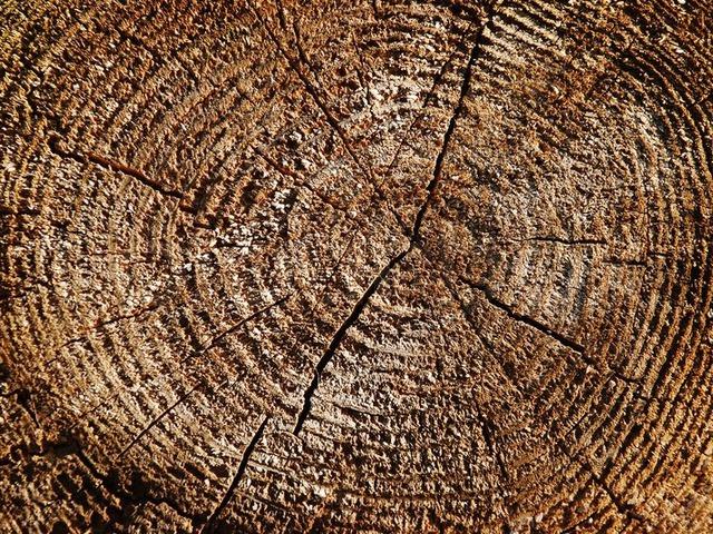 A fák évgyűrűi tanúskodnak a múlt klímaváltozásairól