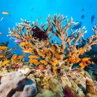 Ötször fenyegette eltűnés a Nagy Korallzátonyt az elmúlt 30 ezer évben