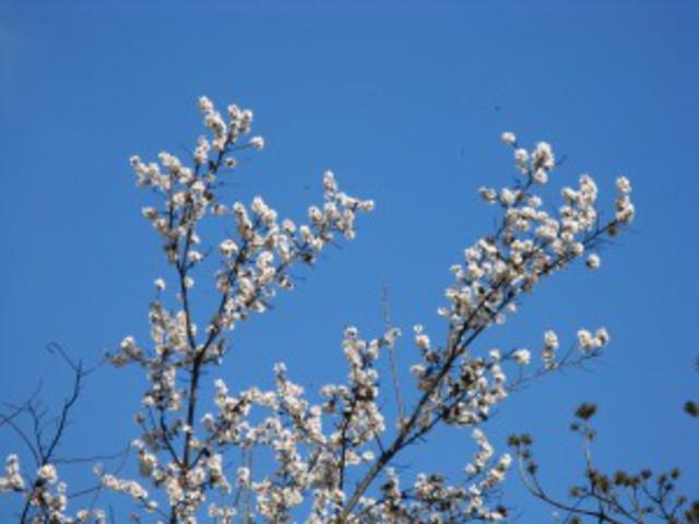 Tavaszelő