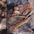 Gőzzé váltak Pompei és Herculaneum áldozatai a termikus sokk nyomán