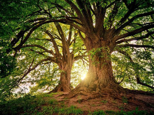 Lassul a fák növekedése