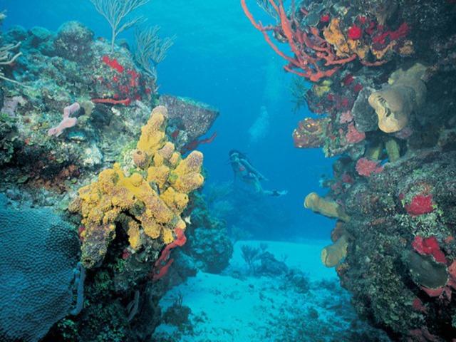 Veszélyeztetett természetvédelmi területek