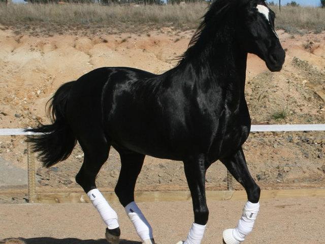 Hogyan küzdik le a lovak a stresszt?