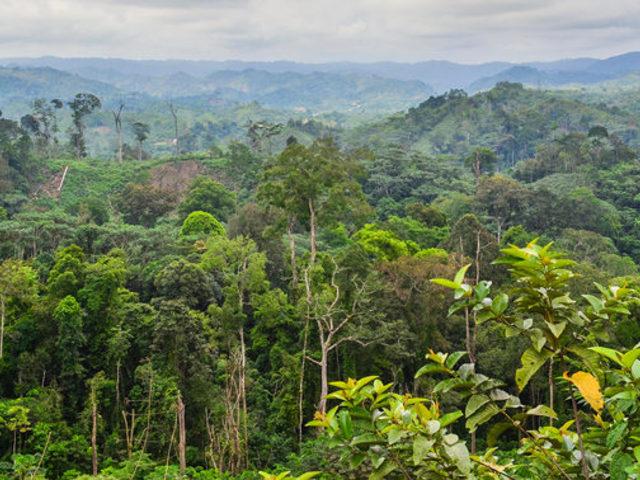Afrika megelőzte Amazóniát a levegő tisztításában